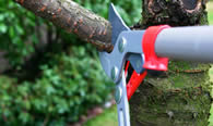 Tree Pruning Services in New Port Richey FL